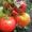 Семена коллекционных сортов томатов #434796