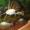 Большие аквариумные рыбки #530125