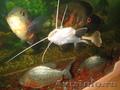 Большие аквариумные рыбки