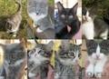 Отдам весёлых,  подвижных,  красивых котят в надёжные добрые руки.