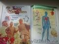 Продаю книги как устроено тело человека
